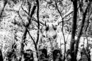 Hidden Elk