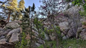 The Boulders in Spring