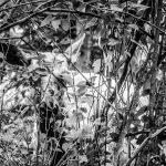 Elk Mama Hidden In The Trees