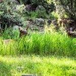 Hidden Cow Elk - Summer 2019