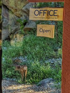 Fawn by the Office