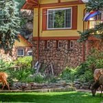 Elk on the front lawn