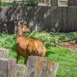 Elk in the Gracious Garden