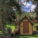 Elk by the Chicken Coop