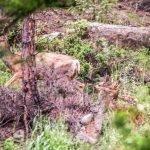 Elk In The Trees