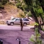 Bulk Elk Arriving