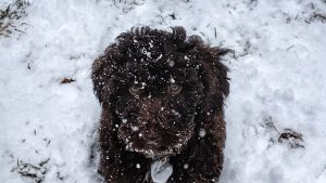 Chica the Snow Dog