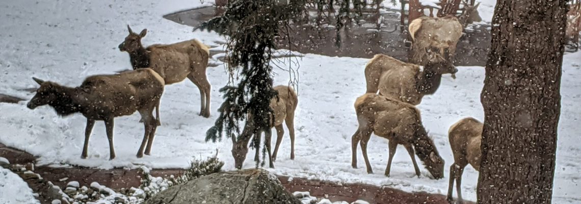 Elk Parade - April 12 2020