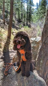 Chica on the Trail in Corwina Park