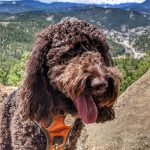 Chica at Panorama Point in Corwina Park