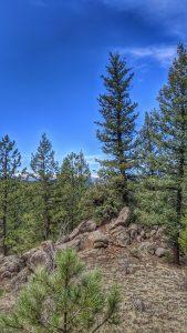 O'Fallon Park Along the Bear Creek Trail
