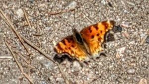 Butterfly On The Bear Creek Cutoff Trail