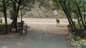 Calf Entering the Property